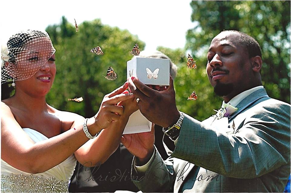 Buy Butterfly Release Wedding Packages from Cloverlawn Butterflies Butterfly Release Company