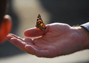 live butterflies for funerals