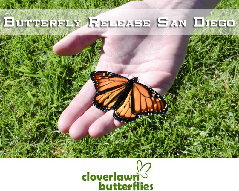 Butterfly Release San Diego -  Buy Butterflies to release in San Diego California